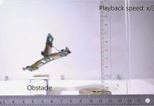 Roboter-Ameisen