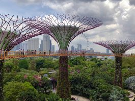 Gardens by the Bay. Foto: Nick Fewings/Unsplash