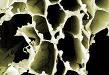 Nachdem die starre Holzstruktur mit Säure (oder einem Pilz) aufgelöst wird, bleiben flexible Zelluloseschichten übrig. Foto: ACS Nano/Empa