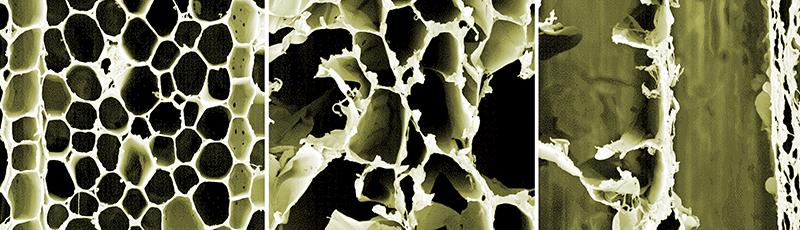 Nachdem die starre Holzstruktur (links) mit Säure (oder einem Pilz) aufgelöst wird, bleiben flexible Zelluloseschichten übrig (mitte und rechts). Foto: ACS Nano/Empa