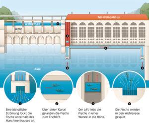 Funktionsweise des Fischlifts. Klicken zum Vergrössern. Grafik: BKW